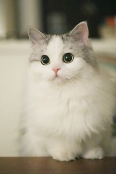 Cute Cats And Kittens And Dogs onto Cute Cats And Dogs Memes lest Cute Kittens Mobile Wallpaper her Cute Animals Wallpaper For Android Phone most Cute Kittens Love Cute Kittens, Fluffy Kittens, Pretty Cats, Beautiful Cats, Animals Beautiful, Cute Baby Animals, Funny Animals, Cute Creatures, Baby Cats