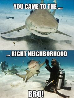 Friendly shark.