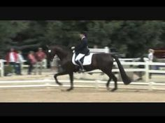 www.HWfarm.com presents 3 x Young Horse Champion SeltenHW