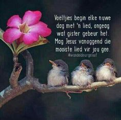 Life is a treasured asset.don't let it pass by without pausing to think about each moment~~~selah vita Biblical Quotes, Empowering Quotes, Faith Quotes, Life Quotes, Wayne Dyer, Good Morning Wishes, Good Morning Quotes, Evening Greetings, Afrikaanse Quotes