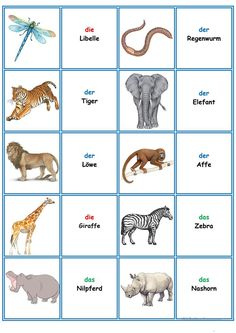 Learning German animals Games in German lessons: Memory - the T . German Language Learning, Learn A New Language, Deutsch Language, Deco Panel, Animal Worksheets, Dutch Words, Learn German, Language Lessons, Writing Words