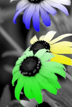 black and white with color