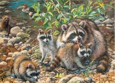 Raccoon Family - Family Jigsaw Puzzle by Cobble Hill Easy Paintings, Watercolor Paintings, Raccoon Family, Number Drawing, Racoon, 5d Diamond Painting, All Gods Creatures, Drawing Skills, Amazon Art