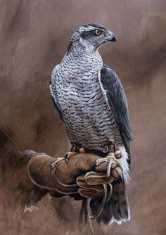Birds of Prey, Falcon, Falconry, Wildlife, African, Game and Shooting Prints, Paintings, Gicless - Andrew Ellis Paintings