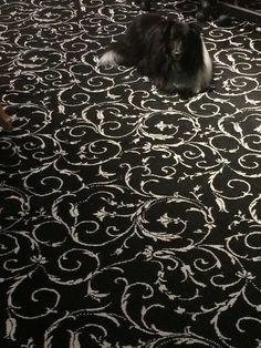 Can you spot Suky?  #PoshBridallLanc #Lancaster #Bridal #Sheltie #ShetlandSheepdog #Rescue #RescueDog #Dog #Adopted