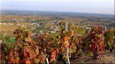 Zubehör für Weinbergzäune Berg, Vineyard, Pergola, Outdoor, Outdoors, Vine Yard, Outdoor Pergola, Vineyard Vines, Outdoor Games