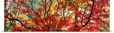 Poster Print Wall Art Print entitled Autumn leaves, Westonbirt Arboretum, Gloucestershire, England, None