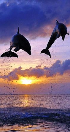 Dolphins frolicking in the sunset 海豚 Wild Life, Beautiful Creatures, Animals Beautiful, Cute Animals, Beautiful Ocean, Beautiful Morning, Animal Pictures, Cool Pictures, Beautiful Pictures