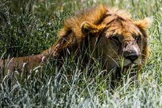 Tag 5: Highview Hotel - Serengeti - Serengeti Wildcamp