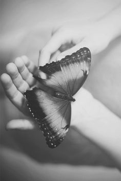 Butterflies are so beautiful and complex.