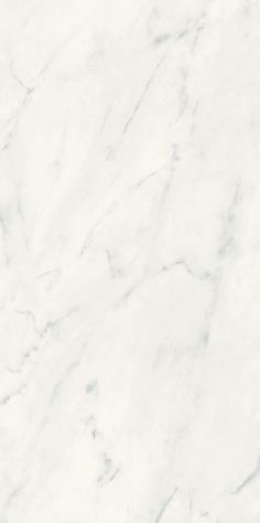 Florida Tile - Gallant Carrara look porcelain tile; available in gloss or matte with accent pieces. Shower walls without the upkeep?
