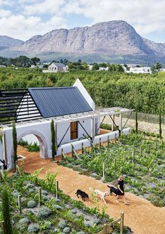 Timber Planks, Cape Dutch, Going Dutch, Dutch House, Design Language, Living In New York, Farm Yard, Textured Wallpaper, Vines