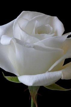 Pristine White...
