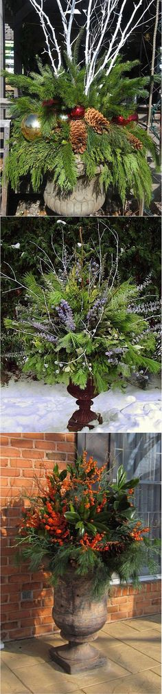 Winter Container Garden Ideas #christmasdecorations #christmasdecor #christmastree #cristmas #merrychristmas #xmas #christmas #santa #santaclaus #christmastime #christmas2016#christmastree #christmasparty#christmasgift #christmaslights#christmaseve #christmasday#christmasiscoming #christmasmarket#christmasdecorations #christmasmood#xmas #xmastree #xmas2016 #holiday#holidays #holidayseason #holidayspirit#holidays2016 #holidaycountdown
