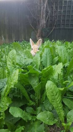 bunny in the field
