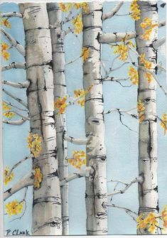 Birch trees w gold leaves