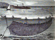 "Sardinal - illustr. from ""Die Balearien"" by l'Arxiduc Luis Salvador, ca. 1870"