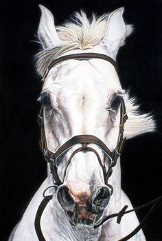 Liliana Gauris, pinturas realistas de caballos, arte realisto argentino, realismo en la pintura argentina, arte realista