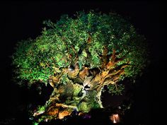 Daily Disney - Tree of Life at Night by Express Monorail, via Flickr