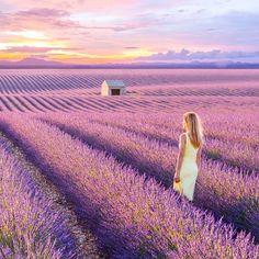 Valensole Plateau: Provence, France