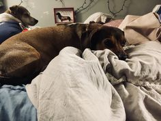 Weiner Dogs, Home, Weenie Dogs, Ad Home, Homes, Haus, Houses
