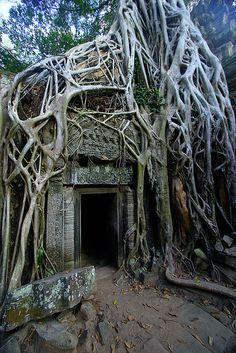 Cambodia, Angkor, temple of Ta Prohm