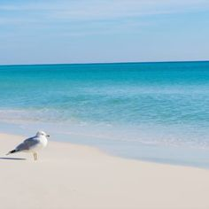 Make memories at Sandestin. The beach is calling. Plan your vacation. You deserve it.