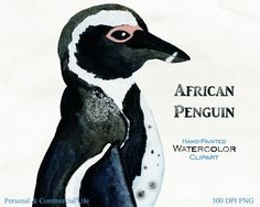 AFRICAN PENGUIN Clipart Commercial Use Clipart by ClipArtBrat