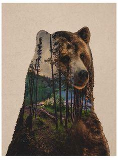 Bear Lake Art Print by Davies Babies … Art And Illustration, Photo Ours, Art D'ours, Art Et Nature, Drawn Art, Lake Art, Bear Pictures, Bear Art, Artist Canvas