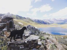 #trekking fantastico tra le #maddalene #lago #trentinodavivere #istanature #falchettolovers #falchetto #montagna #istadog @trentinodavivere @visittrentino @valdinon @hotelfalchetto