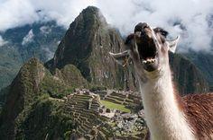 Funny animal gopro photos