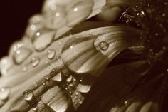 Petals and the rain drops, flower photography, rain drops, nature photography, JPG, instant download, wall art decor