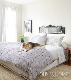Dogs in beautifully designed homes. | Design: Beth Poulter Photo: Virginia MacDonald