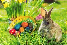 Easter Bunny Pictures and Easter Bunny Images for Designers Real Easter Bunny, Happy Easter, Easter Eggs, Easter Art, Ostern Wallpaper, Easter Backdrops, Rabbit Pictures, Easter Story, Easter Pictures
