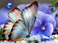 """allmadeborboleta: """"As borboletas são almas.. em cima de uma violeta! Que andam perdidas no ar… sentem o vento a gemer! isabel Ribeiro Fonseca """""""