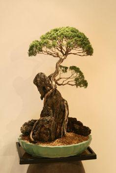 ~ Great Art Bonsai Tree ~