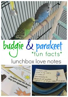 budgie lunchbox love notes | print them EVEN if you don't have parakeets because. . .why not?