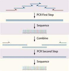 Two-Step Assembly PCR