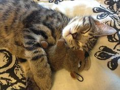 stuffed animals and kitten