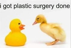 I got plastic surgery done. LOL. #duck #animals #humor  Here at The Crossings we love our pets www.thecrossingsatap.com