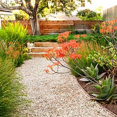 Garden walk: A gravel path edged with succulents leads from the kitchen door and up steps to a meadow of red fescue (additional soil was used to shape the new terrace).