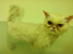 I didn't really NEED a bath!!  Grumpy cat photo by Sheena P.