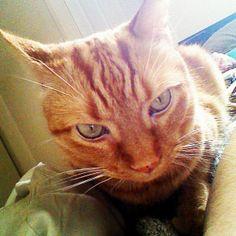 un chat sympa en photo 159 sur http://ift.tt/1oohFRS