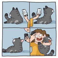 Relatable Cat Comics For Feline Owners & Appreciators - Memebase - Funny Memes Pretty Cats, Cute Cats, Funny Cats, Beautiful Cats, Chat Kawaii, Cat Toilet Training, Potty Training, Cat Comics, Funny Comics