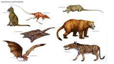 Insectivores BS Creodonts. Row 1: Anagale, Leptictidium, Palaeoryctes; Row 2: Planetetherium, Sarkastodon; Row 3: Icaronycteris, Hyaenodon.