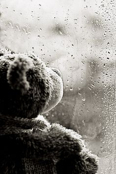 rainy day teddy