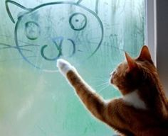 I thought cats, drew lions? Or at least saw them in the mirror! But go Cat go!