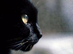 Società - Venerdì 17 febbraio, quarta giornata anti-superstizione - Società - AlessandriaNews