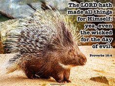Proverbs 16, Bible Verses Kjv