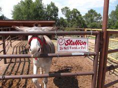 "Clint the ""Stallion!"""